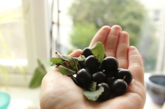 a handful of sloes
